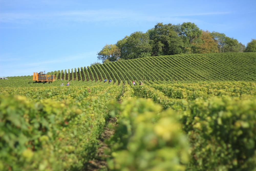 Cowra Wine Region