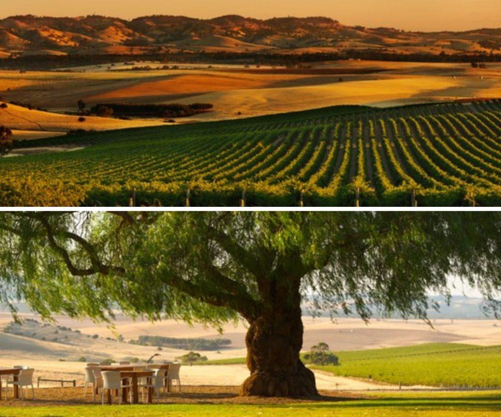 Pindarie Estate Winery